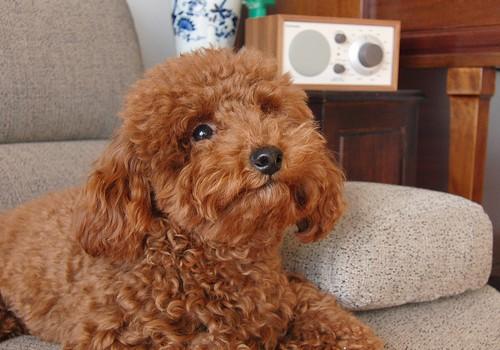 日本で一番人気がある犬の種類は? ペットいっぱい 日本の人気犬種ランキング